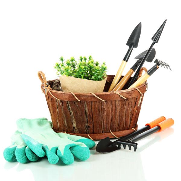 kertészet faiskola